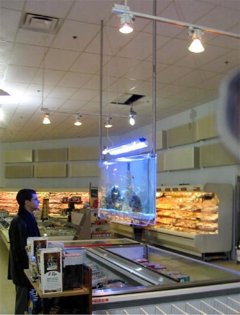 Aquarium_asp_supermarket_46
