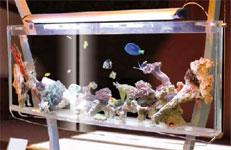 Asp_aquarium_jul_04_1